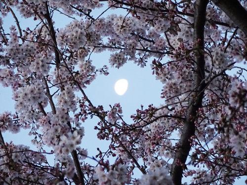 20150330桜と月.jpg